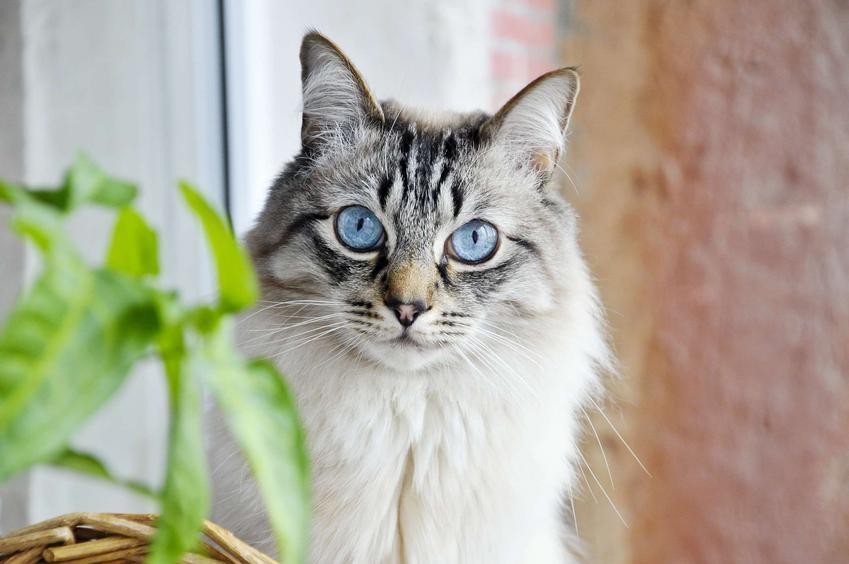 Krople na odrobaczanie kota