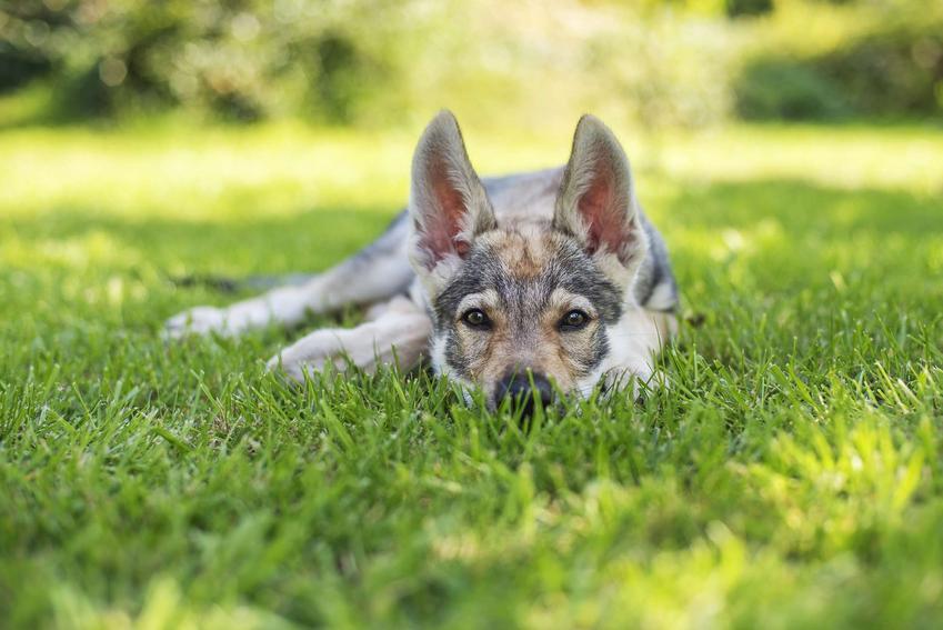 Jaka karma jest najlepsza dla psów małych ras?