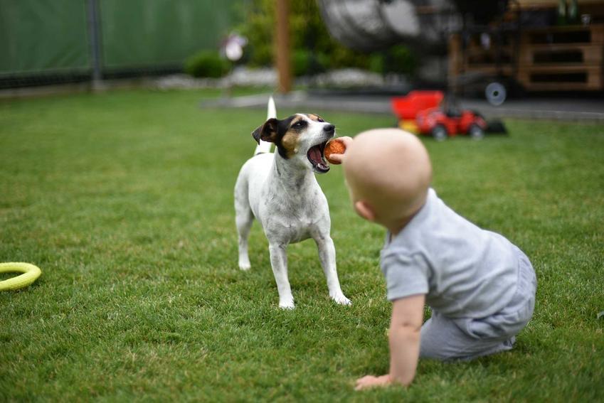 Dziecko bawiące się piłeczką z psem, a także jak wyglądają kontakty między psem a dzieckiem