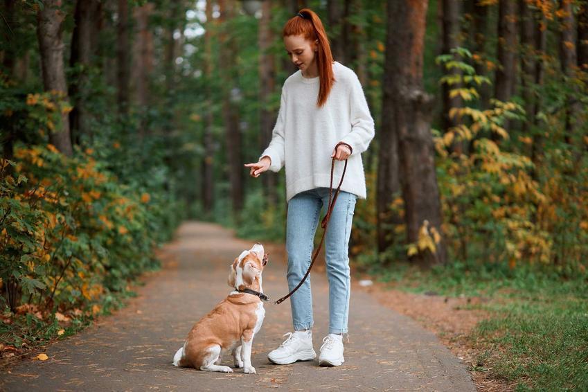 Właścicielka wydająca polecenia psu, a także jak dogadać się z psem, czyli trening i tresura psa oraz posłuch u psa