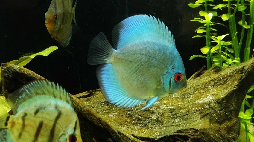 Paletka na tle roślin, a także TOP 10 pięknych i popularnych ryb idealnych do akwarium