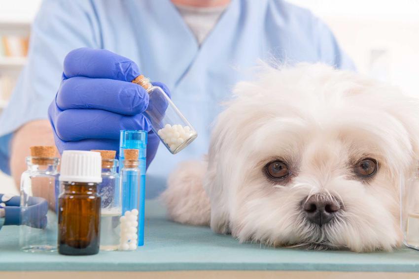 Pies chory na giardiozę, czyli lambliozę u weterynarza, a także opis choroby, sposób zakażenia oraz leczenie krok po kroku
