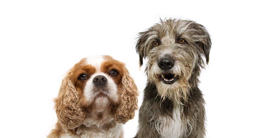 Lady i Tramp - psy znane z bajki