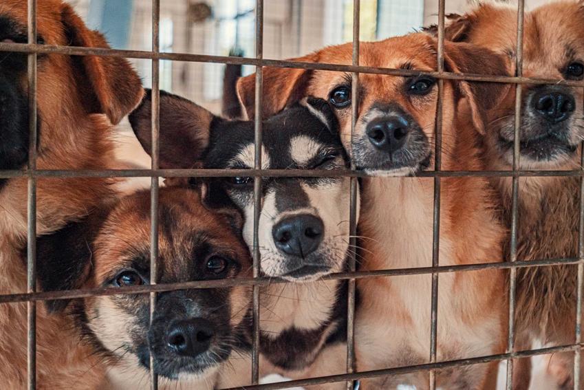 Psy różnych ras w klatce, a także informacje, jaką karę przewiduje prawo za znęcanie się nad zwierzętami - kary i zmiany w przepisach