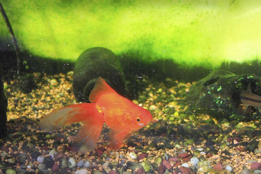 Akwarium zanieczyszczone z powodu pierwotniaków, a także pierwotniaki w akwarium krok po kroku, czyli sposoby na zwalcanie