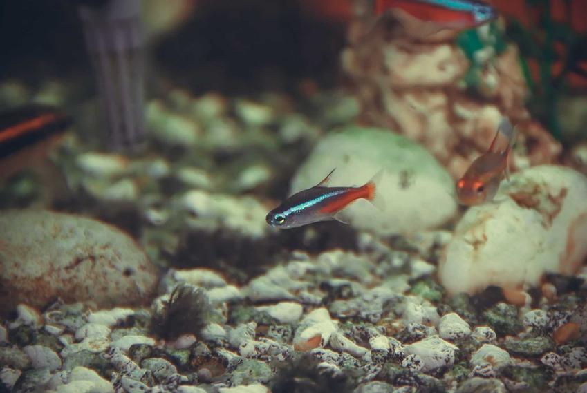 Zanieczyszczone akwarium, a także najlepsze sposoby na pierwotniaki w akwarium i jak je zwalczyć