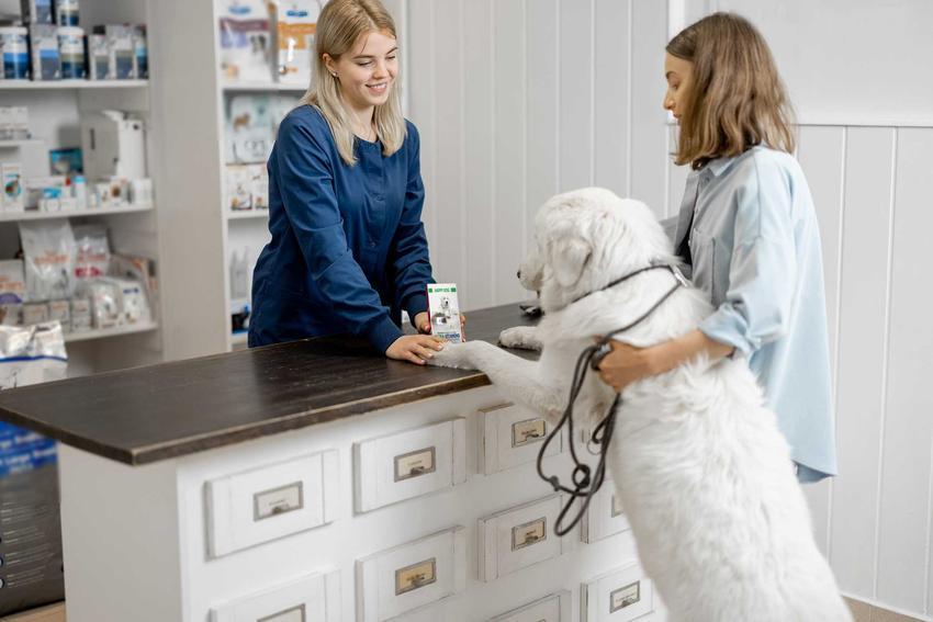 Pies i właściciel wybierają tabletki na stawy dla psów, a także 5 najlepszych preparatów na stawy krok po kroku