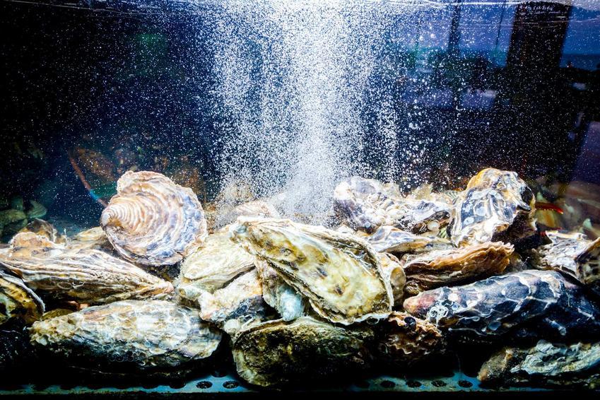 Napowietrzanie akwarium spomiędzy ozdobnych kamieni, a także napowietrzanie wody w akwarium krok po kroku