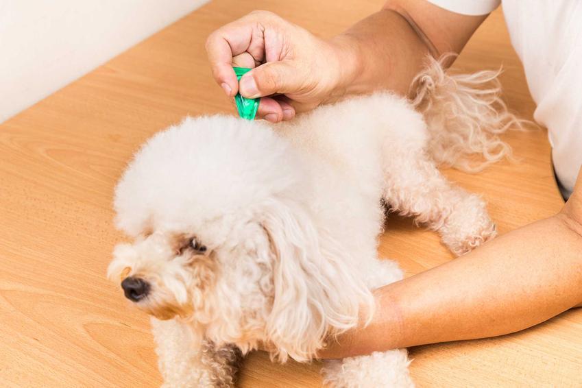 Podawanie kropli na karczek u psa, a także krople na kleszcze, ceny preparatu, rodzaje i skuteczność