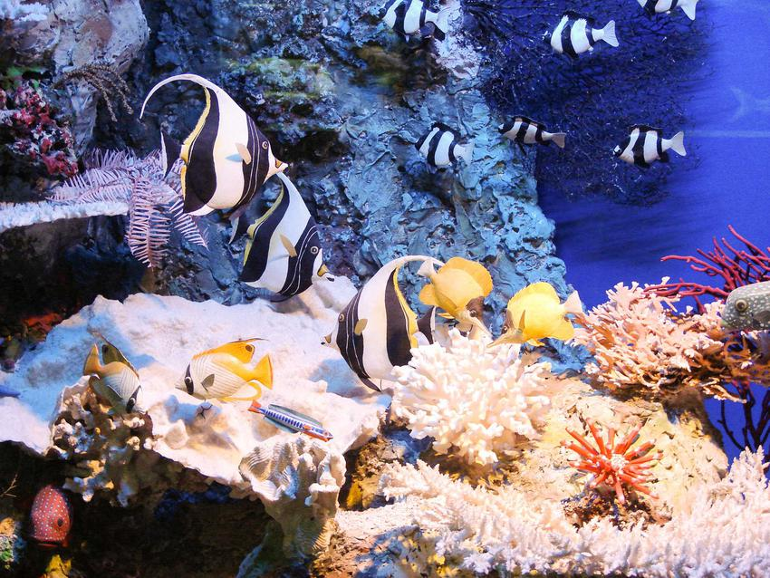 Akwarium z ciekawymi rybkami typowymi w hodowli, a także najciekawsze gatunki ryb akwariowych krok po kroku
