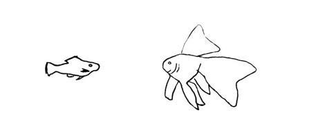 Schemat ryby welona, a także gatunki, wymagania welonków, pielęgnacja oraz rozmnażanie