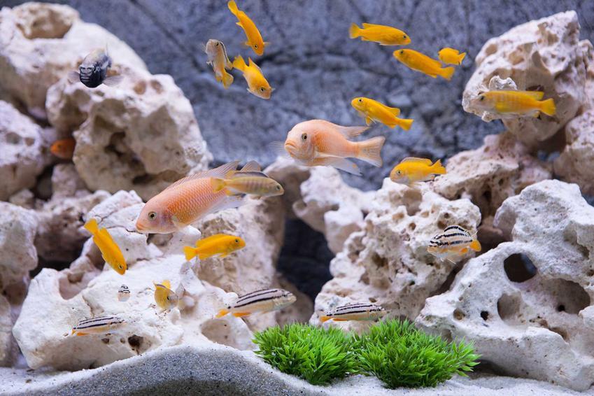 Szare, kamienne tło do akwarium, a także cena teł, najlepsze rodzaje, polecane kolory, porady i montaż