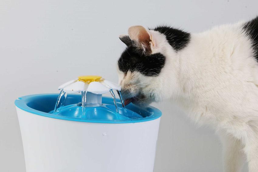 Kot pijący z wodopoju dla kotów, a także co zrobić, jesli kot nie pije wody w upały, przyczyny i rozwiązanie problemu