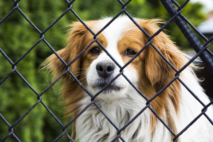 Pies w schronisku za kratami, a także problemy z lękiem u psów ze schroniska, jak pracować z lękliwym psem