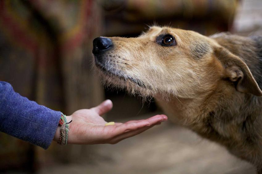 Praca z lękliwym psem ze schroniska krok po kroku, czyli jak pracować z psem ze schroniska, zachowania i porady