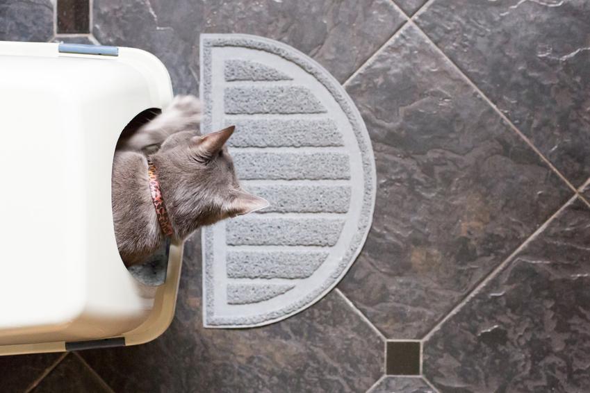 Kot wychodzący z kuwety, a także kuweta samoczyszcząca dla kotów i jej działanie