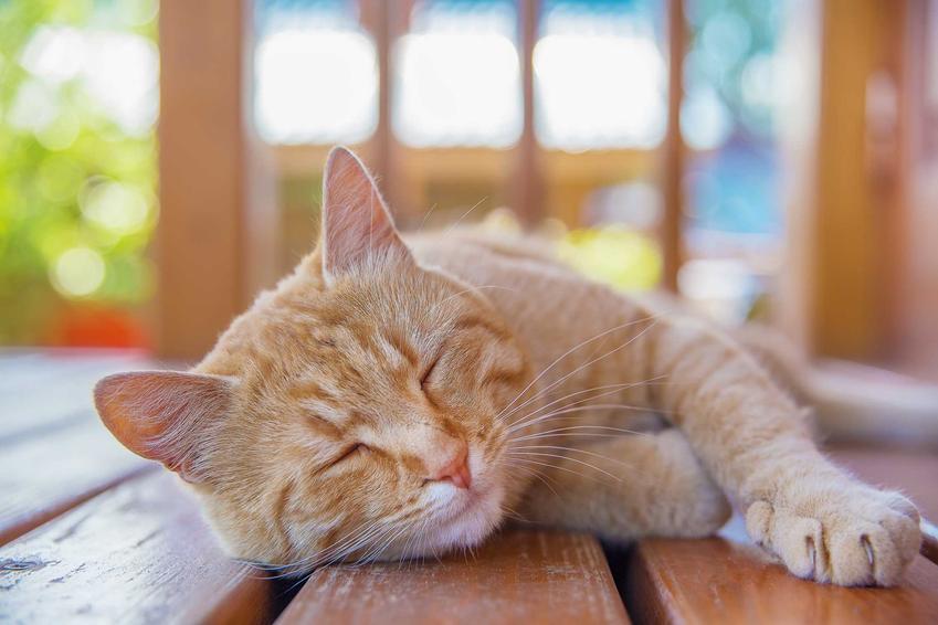 Kot leżący na deskach tarasu, czyli udar cieplny u kota, a także objawy, zapobieganie i przegrzanie
