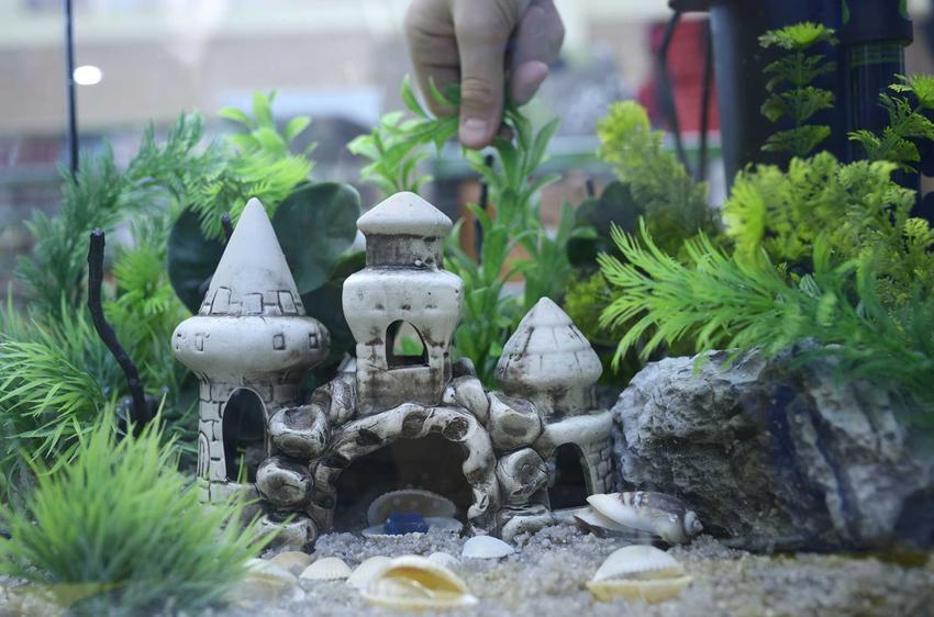 Ceramiczny zamek do akwarium, a także TOP 5 ozdób do akwarium, które warto rozważyć