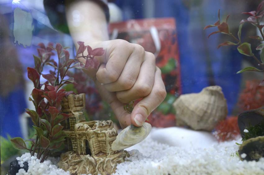 Muszelki układane w akwarium, a także TOP 5 innych ozdób, które warto mieć w akwarium