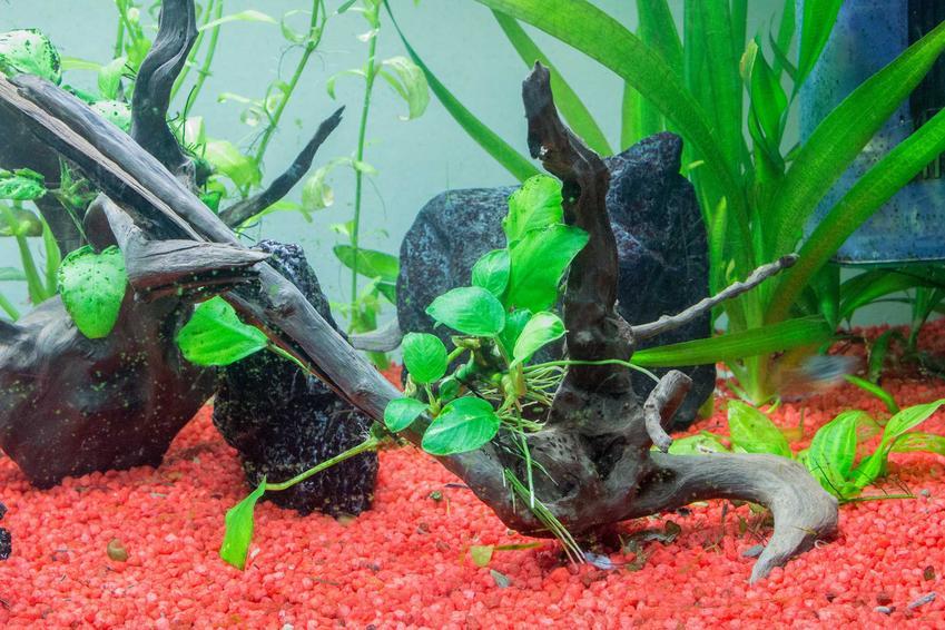 Sadzenie roślin i układanie korzeni w akwarium, a także zakładanie akwarium krok po kroku, porady oraz opis