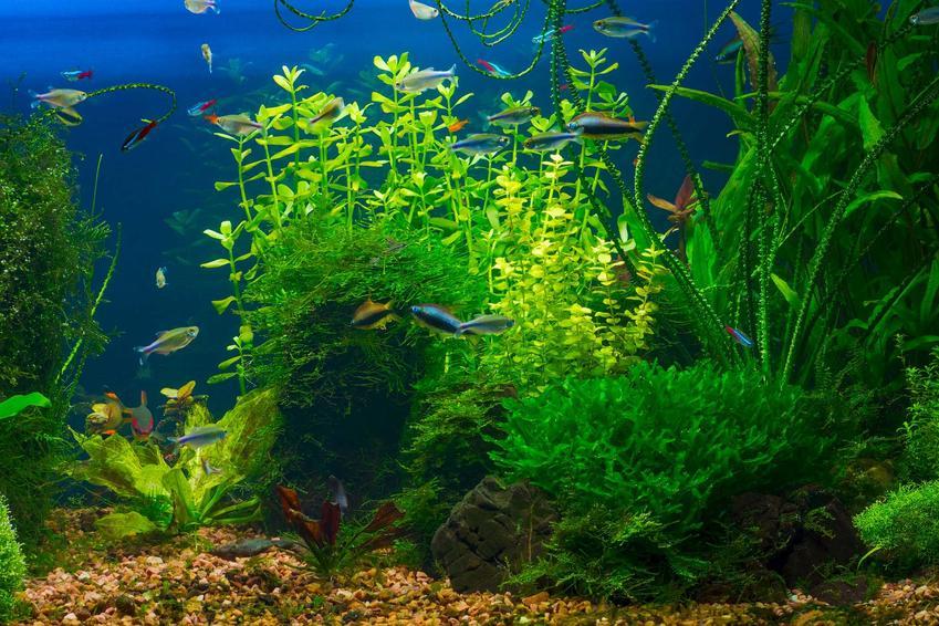 Akwarium, w którym panują złe warunki i mogą rozprzestrzeniać się choroby, a także TOP 10 chorób ryb akwariowych
