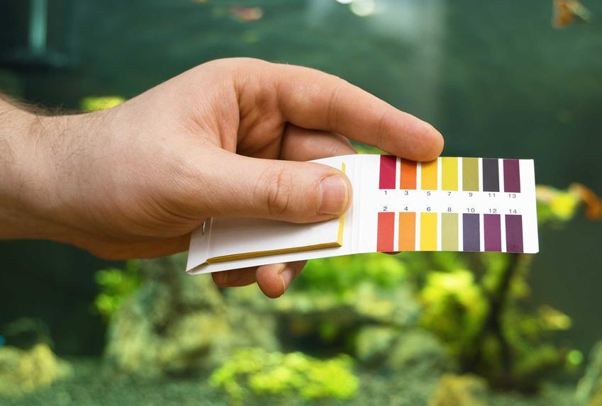 Sprawdzanie poziomu pH wody w akwarium, a także TOP 10 chorób akwariowych, w tym także zatrucie chlorem