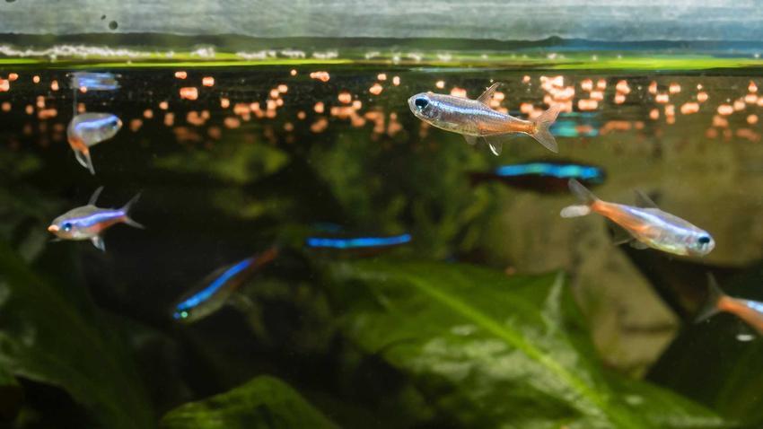 Karmienie rybek w akwarium oraz TOP 5 najlepszych pokarmów dla ryb akwariowych