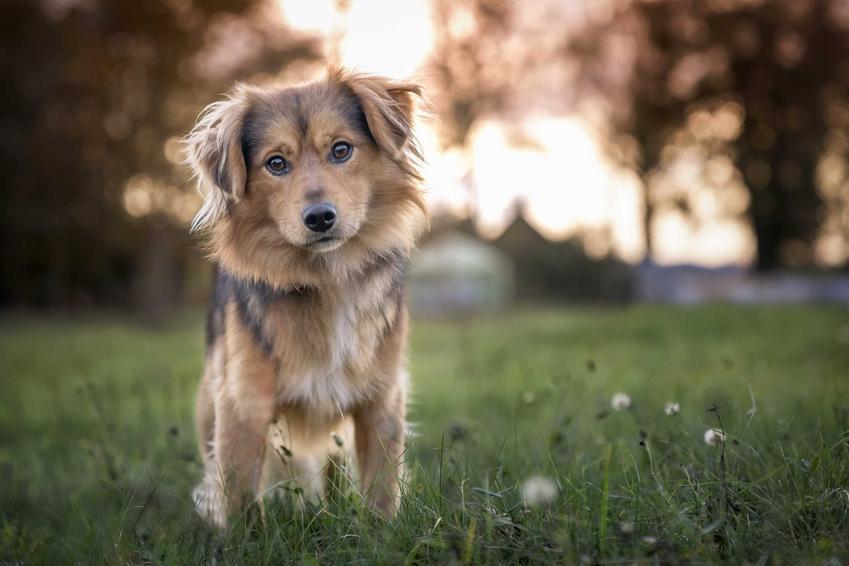 Pies adoptowany ze schronika, a także informacje, czy kupić, czy adoptować psa, wady i zalety