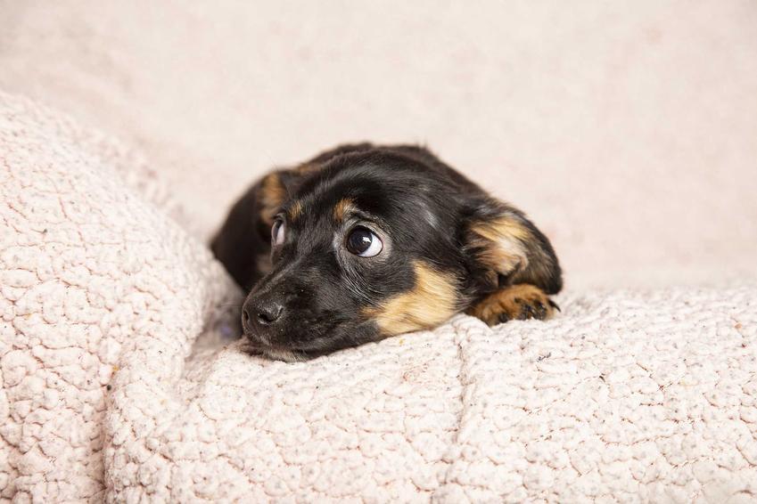 Pies boi się w czasie burzy, czyli jak pomóc zwierzakowi, który wpada w panikę podczas burzy