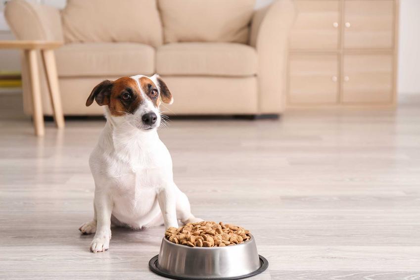 Pies przy misce pełnej jedzenia, a także białko w diecie psa i kota, czyli aminokwasy oraz ich źródła w diecie psa