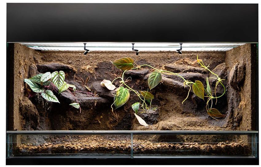 Terrarium dla węża z korzeniami i liśćmi, a także przygotowanie terrarium dla węży krok po kroku