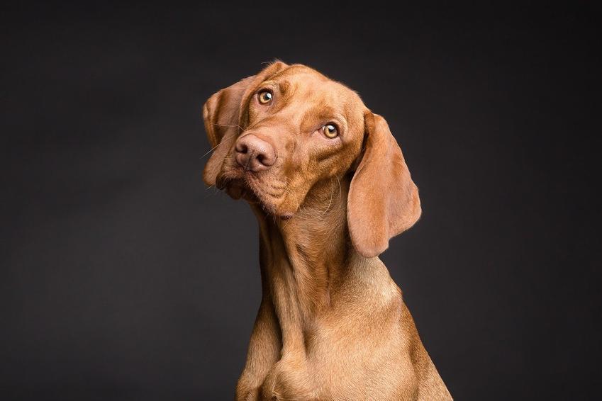 Karma dla psa junior – na specjalne potrzeby