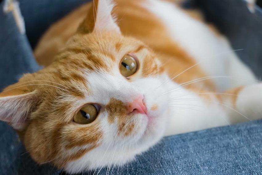 Chory kot, który wymiotuje, a także informacje, dlaczego kot wymiotuje, najczęstsze przyczyny i leczenie