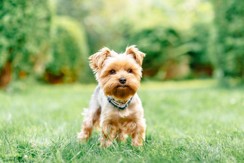 Trawienie to klucz do sukcesu – zobacz, jak je usprawnić u małego psa