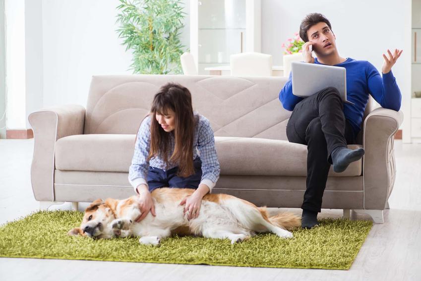 Co zrobić kiedy pies ma kleszcza, jak pozbyć się pcheł u psa, jak rozpoznać że pies ma robaki, jak często odrobaczać psa
