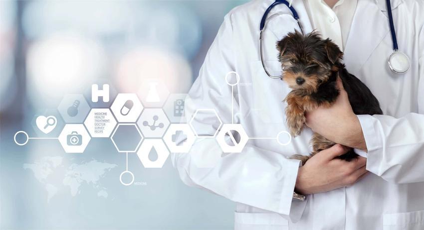 Szczeniak siedzi na rękach pana w białym kitlu ze stetoskopem przewieszonym na szyi, czy w karmie dla psów są witaminy