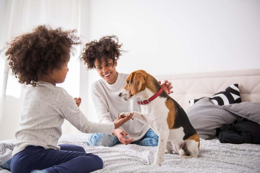 Mama z córką i psem siedzą na łóżku, głaszczą psa i opiekują się nim, probiotyki dla psa dostępne w Polsce, opinie weterynarzy na temat probiotyków dla psów