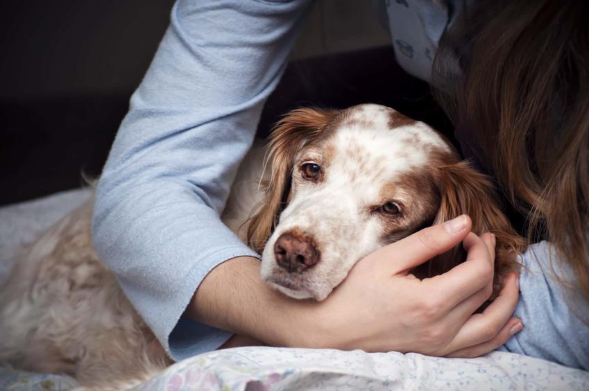 Pies ma położoną głowę na ręku kobiety, pies jest smutny lub zmęczony, gdzie jest przeprowadzany zabieg eutanazji psów i kotów, jak przygotować się psychicznie na śmierć psa lub kota