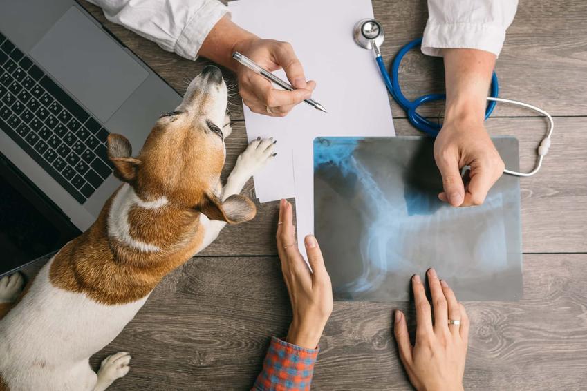 Widok z góry na biurko na którym leży pies, widać kobiece i męskie ręce pokazujące zdjęcie rentgenowskie, co myślą Polacy o przychodniach weterynaryjnych