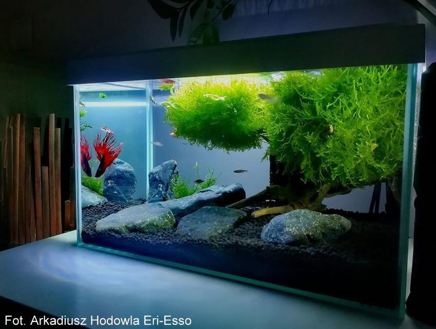 Akwarystyka - zaproś naturę do swojego domu