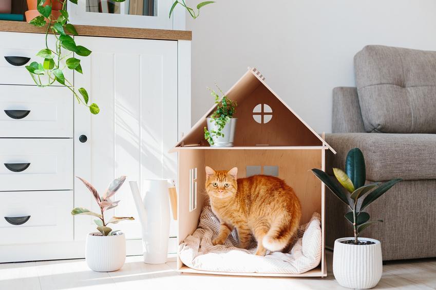 Rudy kot siedzący w drewnianym domku dla kota oraz inny polecany domek dla kota