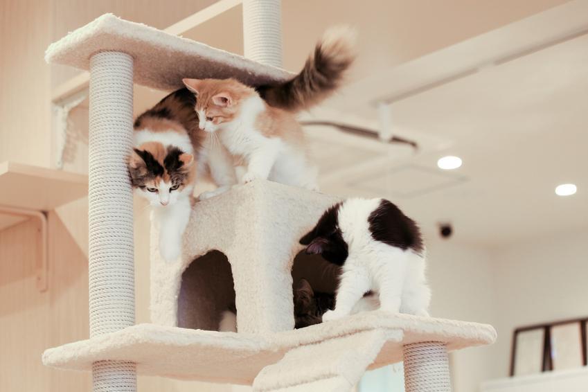 Koty bawiące się na drapaku z domkiem, czyli polecany domek dla kota