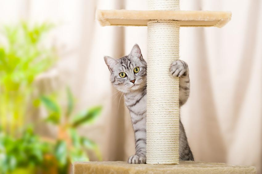 Kot bawiący się na drapaku, a także polecany drapak dla kota, modele i ceny
