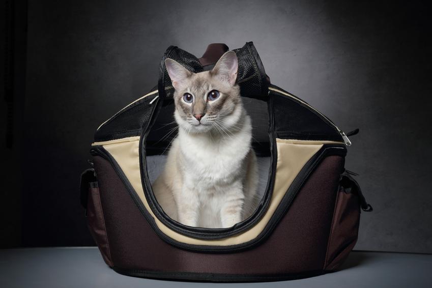 Kot siedzący w transporterku z materiału oraz polecany transporter dla kota