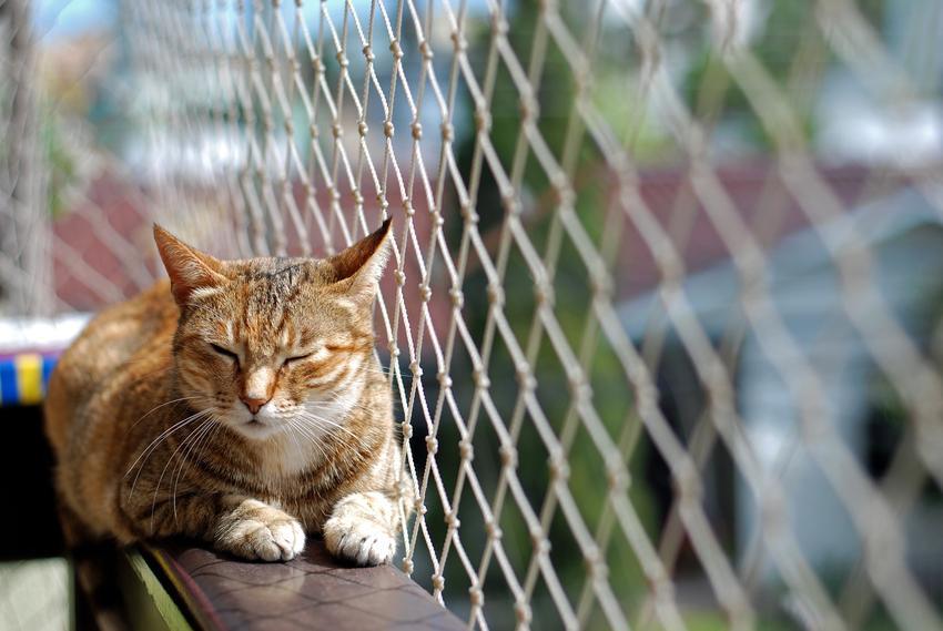Kot siedzący na balkonie za siatką, a także siatka na balkon dla kota