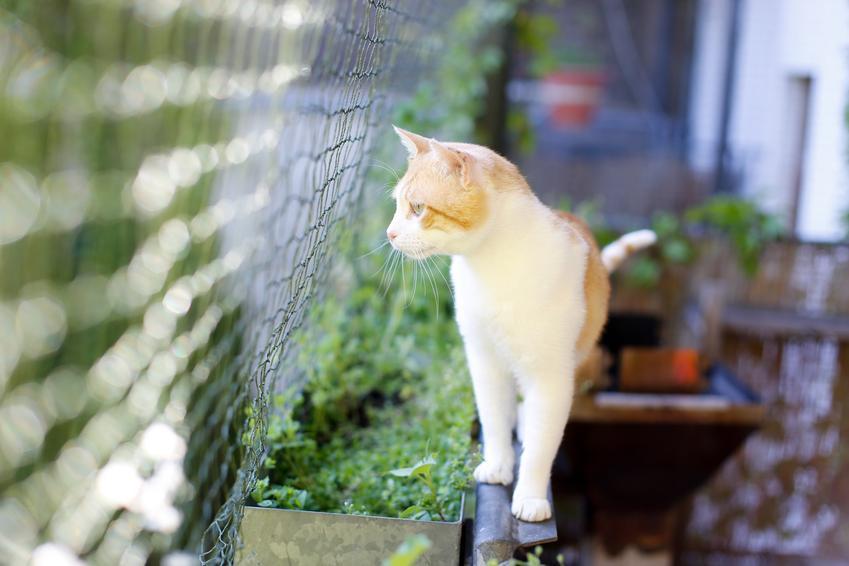 Kot na balkonie patrzący przez siatkę, czyli siatka na balkon dla kota i jej cena