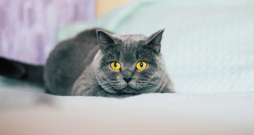 Kot rasowy, czyli koty dachowe a koty rasowe i wszelkie informacje na ich temat przed wyborem