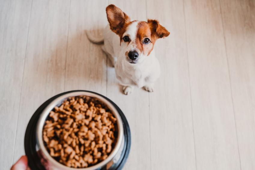 Pies siedzący na podłodze przed miską z jedzeniem, a także porady, jak karmić psa