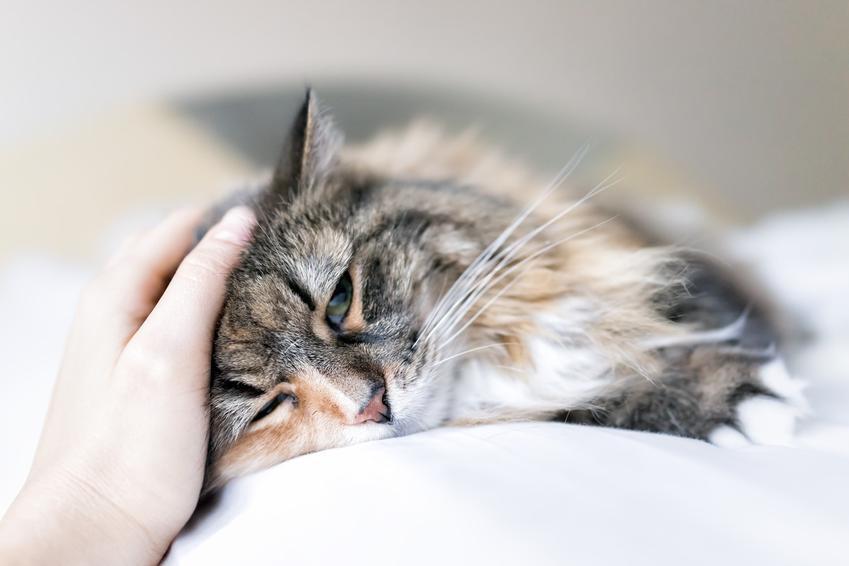 Chory kot głaskany przez właściciela oraz powszechne choroby u kotów i ich leczenie