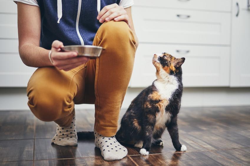 Kot przy właścicielu przed karmienie oraz porady, czym karmić kota, a czego unikać